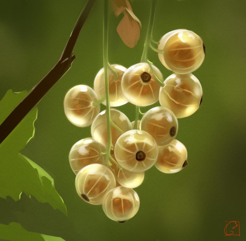 white currant