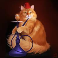 hookah cat
