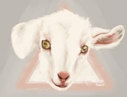 baby goat