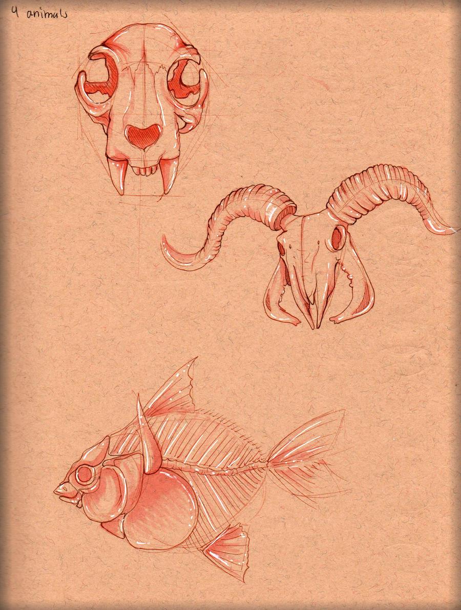 Animal Bone Study by LordMaru4U