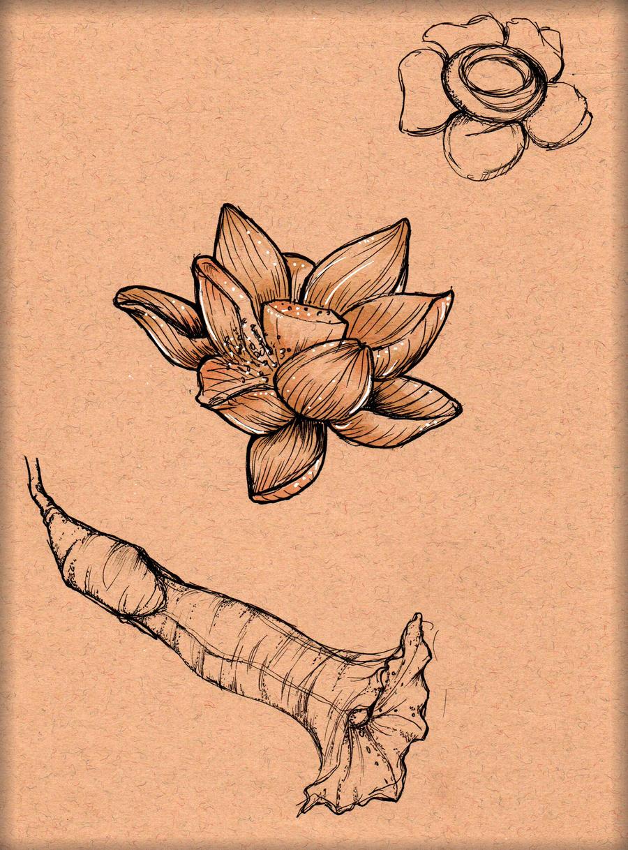 Flower study 2 by LordMaru4U
