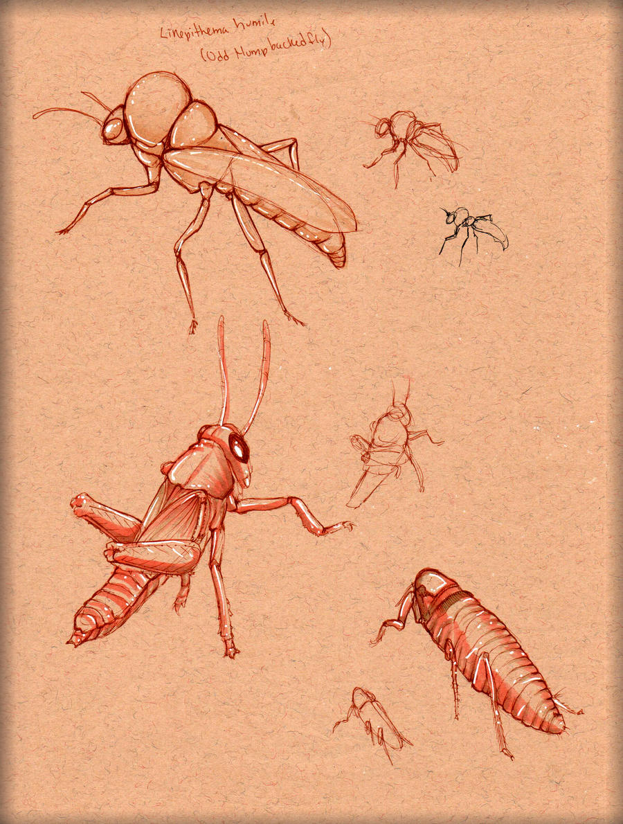 Insect Study 1 by LordMaru4U