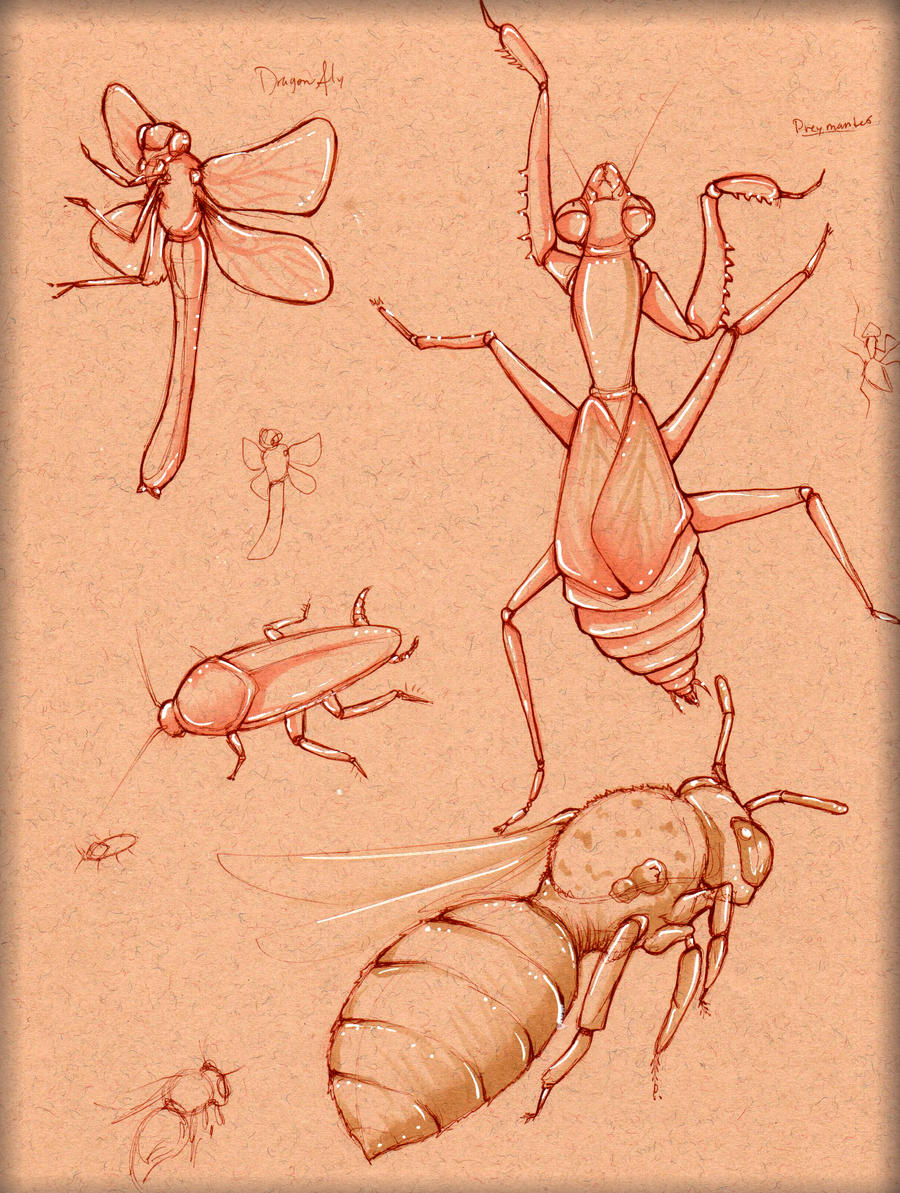 Insect Study 4 by LordMaru4U