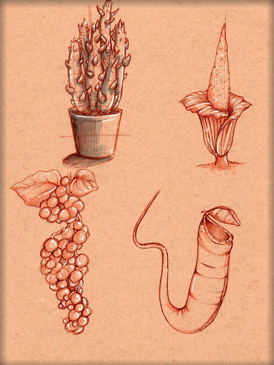 Plant Study 1 by LordMaru4U