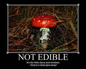 Mushroom - Not Edible