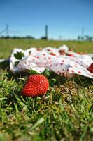 Strawberry Fields Forever by Little-miss-sponge