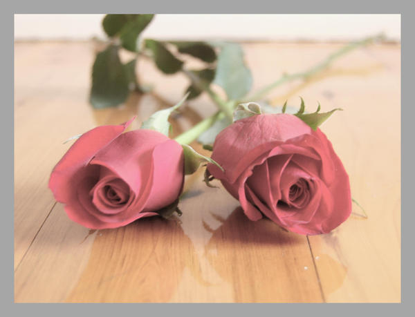 ورود رومانسيه 2_red_roses_by_Little_miss_sponge
