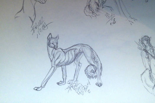 From page 5. close up of the critter