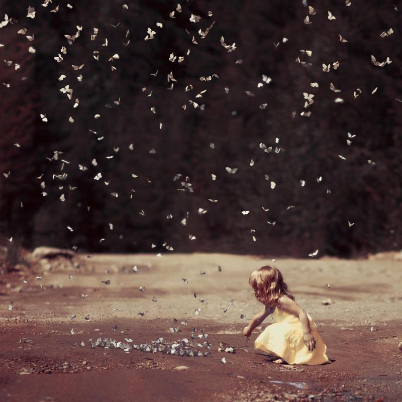 butterflies by AnnaGrazhdankina