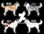 Siberian Husky Adopts - OPEN!