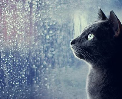 Cat in rain by Darkness-Darkie