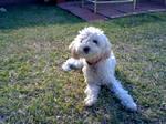 My Puppy!!!