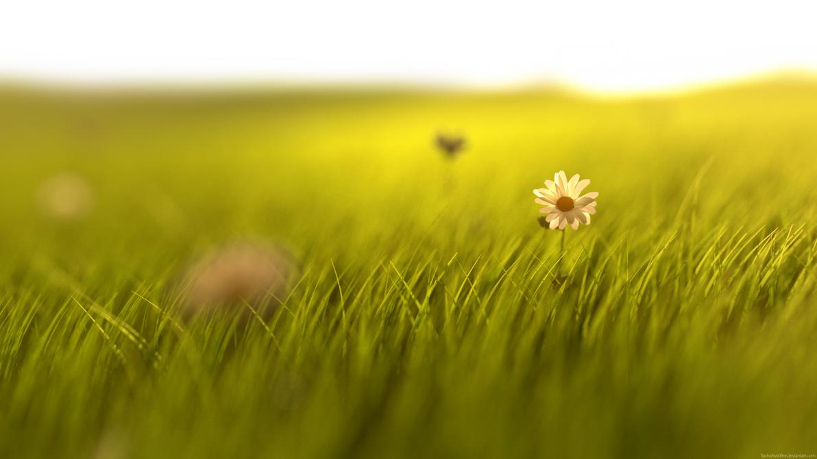Sunrise Flower by FlashofWildfire