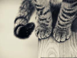 cat by CVRD