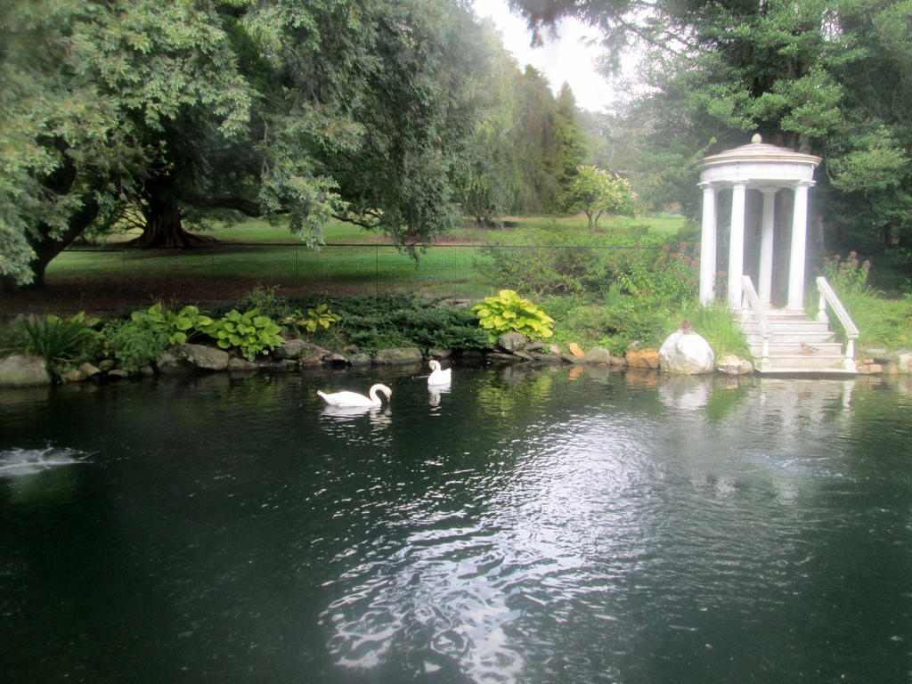 Swan Pond by aradia1015