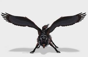 Harper - Wings Edition
