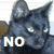 Cat Emoticon: NO