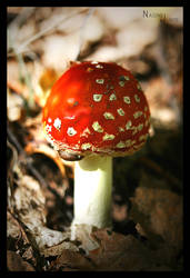 fly agaric by Nadine2390