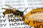 Killer wasp 3