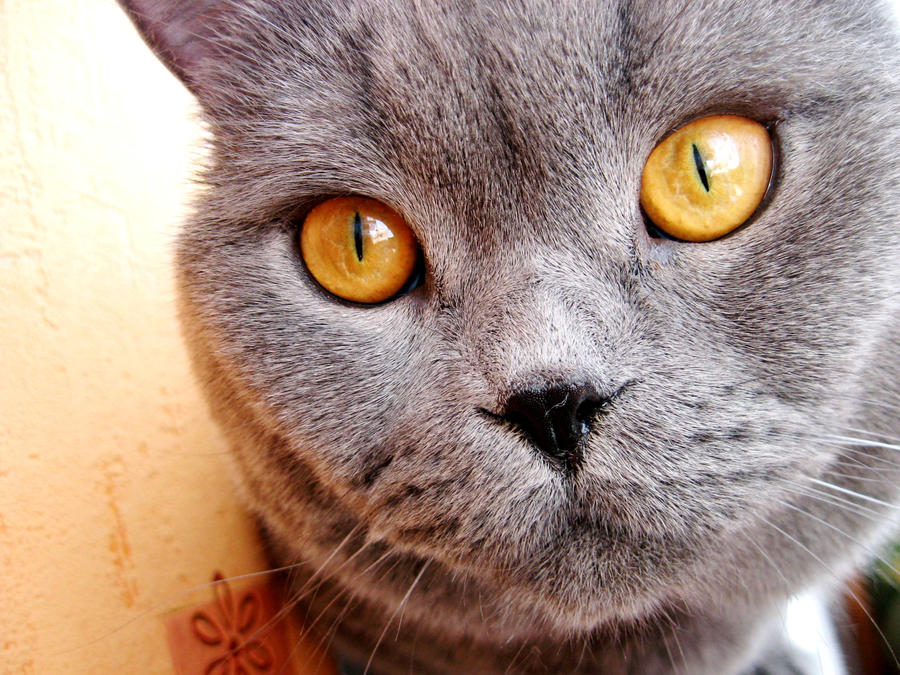 Golden eyes by everythingisaverage