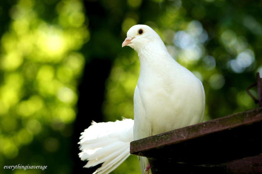 Bokeh bird by everythingisaverage