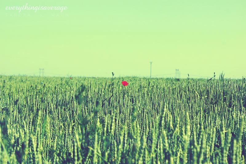 Poppy by everythingisaverage