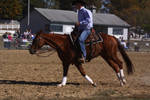 Cantering 19