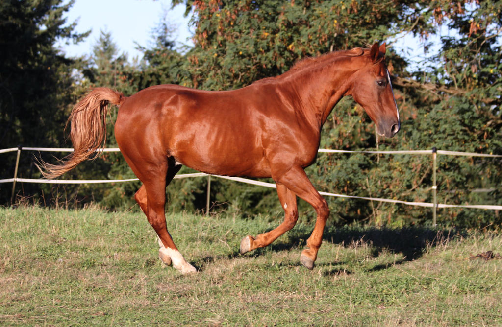 Cantering 31 by SoloPianoStock