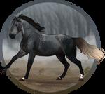 Burralga   Australian Warmblood Stallion