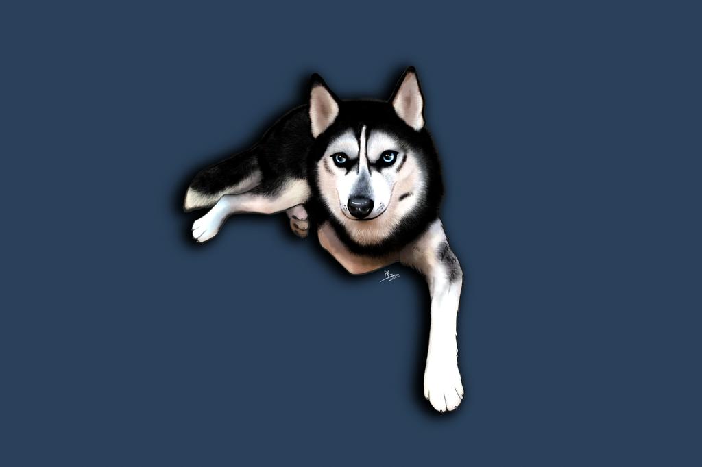 Husky in Repose by ArkadyRose