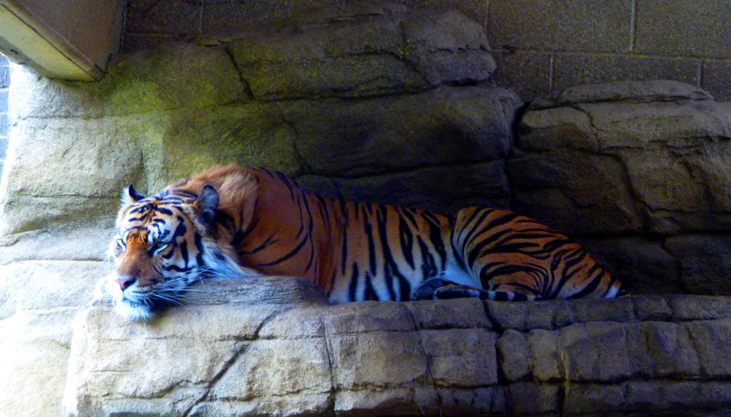 Resting Tiger by ArkadyRose