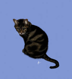 Cat portrait - commission