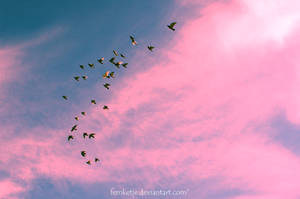 On Pink Clouds
