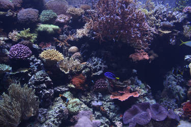 Undersea life 01 by goodiebagstock