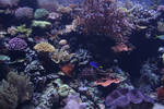 Undersea life 01