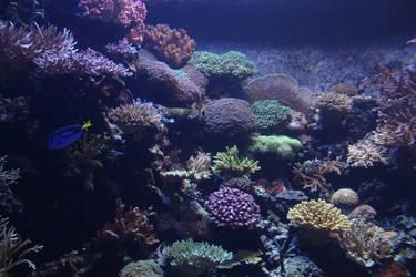 Undersea life 02 by goodiebagstock