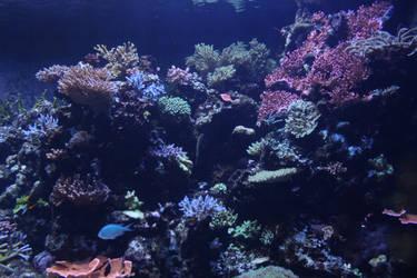Undersea life 04 by goodiebagstock