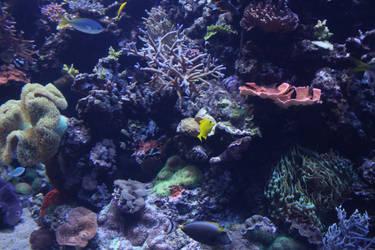 Undersea life 06 by goodiebagstock