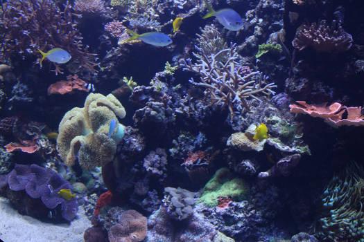 Undersea life 07