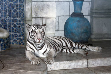 Marina the white tiger 01 by goodiebagstock