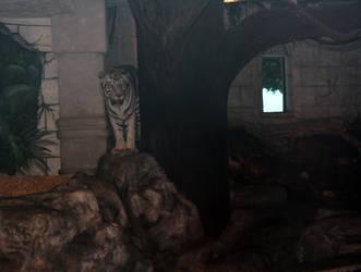 Peeking tiger, hidden ?