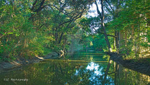 River Scene Austin