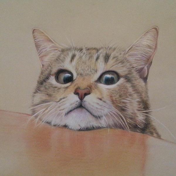 BORED CAT by sabocchia