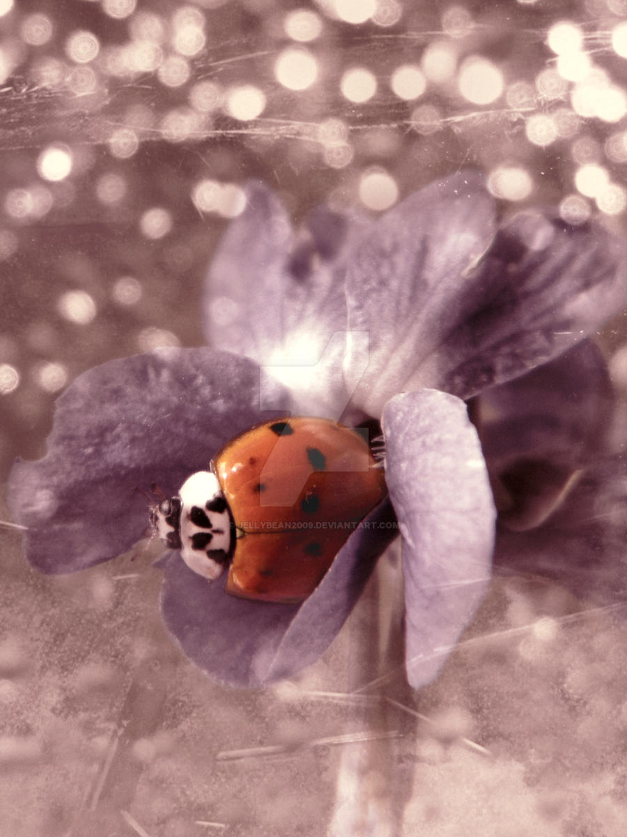 Ladybug On A Wild Violet by jellybean2009