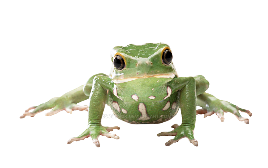 Tropical frog on a transparent background by ZOOSTOCK on ...