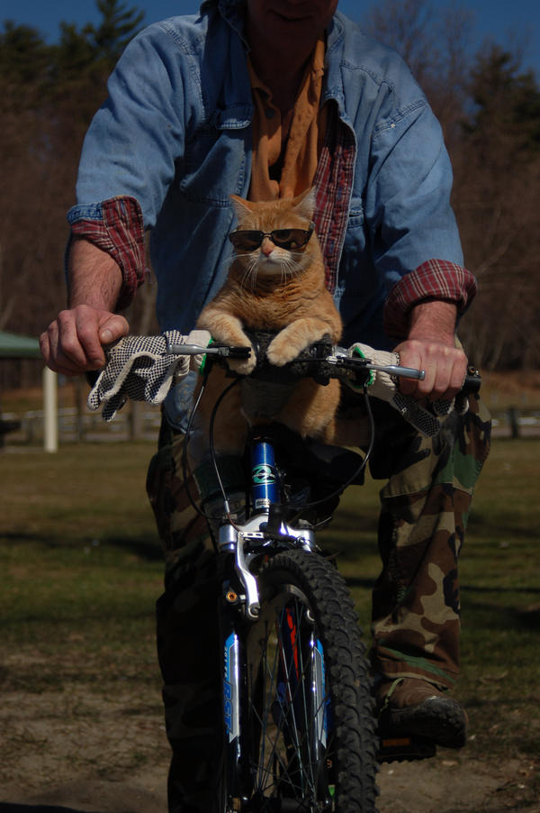 Cat on Bike by mia-hodge