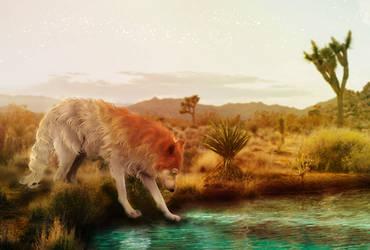 COM: desert sunshine by curiotea