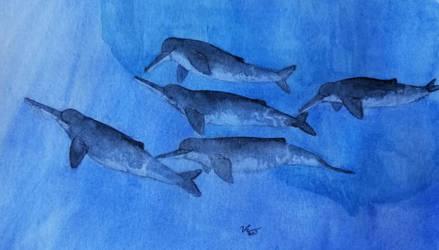 Arctic river dolphin by zachrobinson