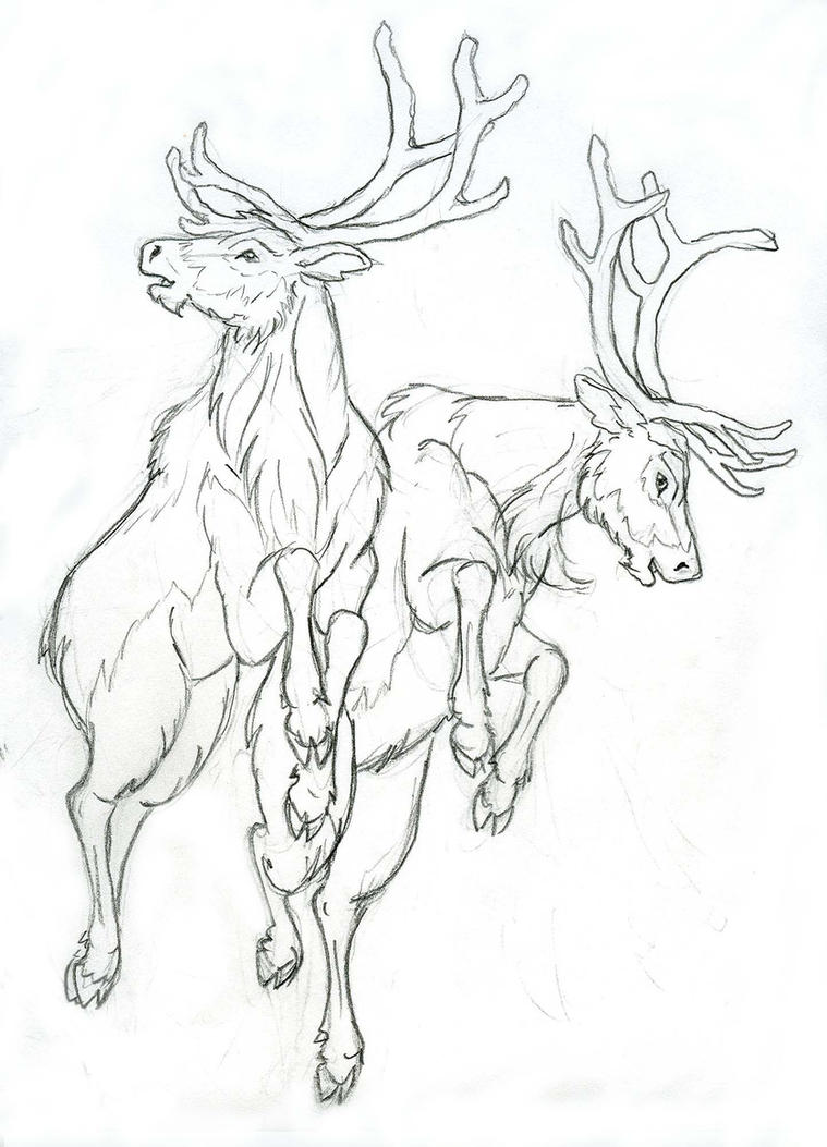 Reindeer Face Line Drawing : More reindeer by lizzy on deviantart
