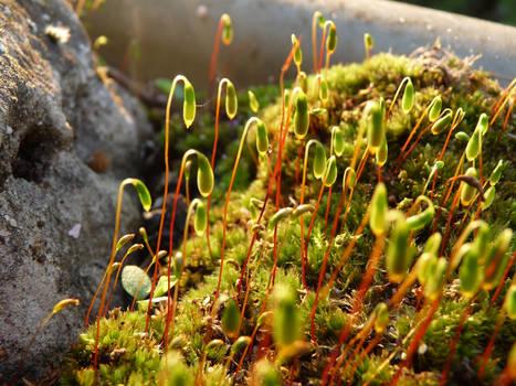 Mossy stems